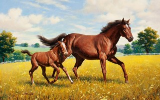 Beautiful Horses Going Field wallpapers and stock photos
