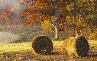 Autumn Trees Hay Bales Field wallpapers and stock photos
