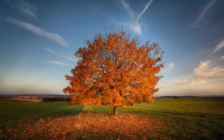 Autumn Tree Leaves Field Sky wallpapers and stock photos