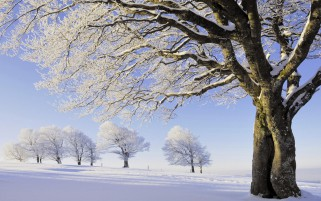 Hugging Trees Hoarfrost Snowy wallpapers and stock photos