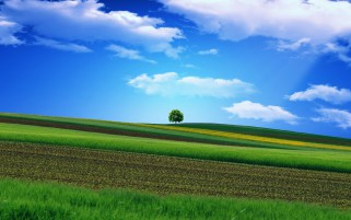 Nice Diagonal Fields & Tree wallpapers and stock photos