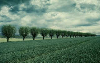 Wonderful Trees Grass & Clouds wallpapers and stock photos