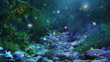 Firefly Insects Glow Scenery wallpapers and stock photos