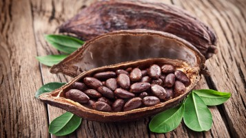 Cocoa Beans wallpapers and stock photos