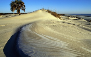 Cumberland Island wallpapers and stock photos