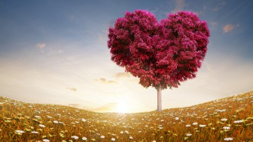 The Love Tree wallpapers and stock photos