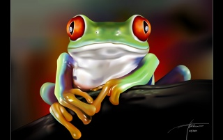Previous: Red Eye Frog