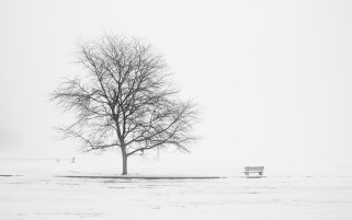 Bench Tree Field Snowy Mood wallpapers and stock photos