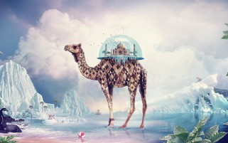Camel Taj Mahal Surreal Scenic wallpapers and stock photos