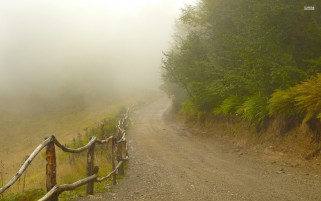 Foggy Path Fences & Forest wallpapers and stock photos