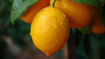 Limones wallpapers and stock photos
