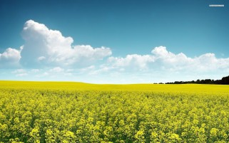 Rape Field Clouds & Sky wallpapers and stock photos