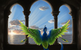 A New Day Peacock Arch wallpapers and stock photos