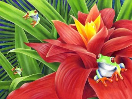 Red Eyed Froggy & Bromelia wallpapers and stock photos
