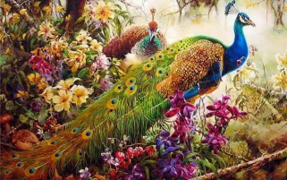 Peacocks & Flowers wallpapers and stock photos