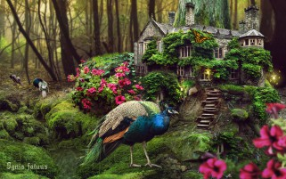 Peacocks Forest House Flowers wallpapers and stock photos