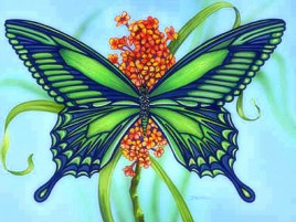 Green Blue Butterfly & Flower wallpapers and stock photos
