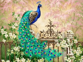 Pretty Peacock Garden Gate wallpapers and stock photos