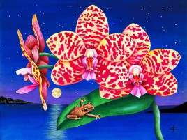 Froggy & Orchids wallpapers and stock photos