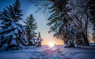 Path To Sunset In Snowy Forest wallpapers and stock photos