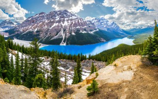 Peyto Lake Banff Canada Firs wallpapers and stock photos