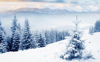 Nieve En Firs wallpapers and stock photos