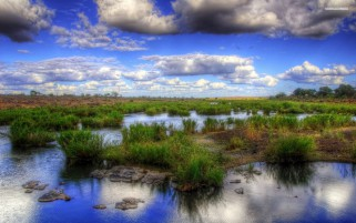 Random: Pond Grass Puffy Clouds Scenic