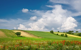 Poppys Meadow Trees Hills Sky wallpapers and stock photos