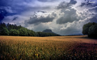 Magic Wheat Field Clouds Trees wallpapers and stock photos