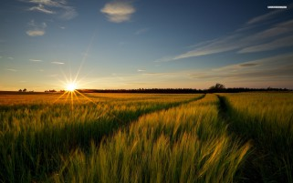Wheat Field Sky Path Sunset wallpapers and stock photos