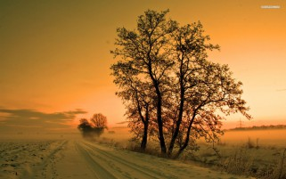 Foggy Winter Road Trees Sunset wallpapers and stock photos