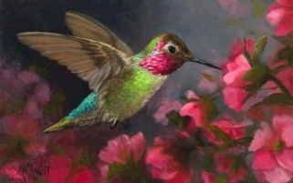 Hummingbird & Pink Flowers wallpapers and stock photos