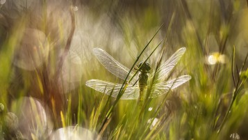 Dragonfly in the Grass wallpapers and stock photos