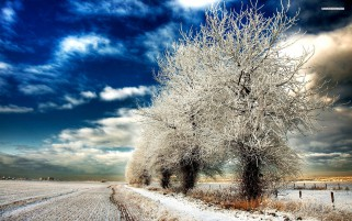 Random: Pretty Winter Trees Field Snow