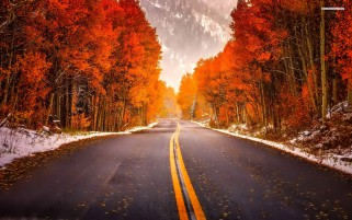Orange Autumn Forest & Road wallpapers and stock photos