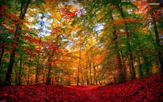 Extra Ordinary Autumn Forest wallpapers and stock photos