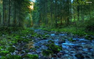 Stunning River Stones & Forest wallpapers and stock photos