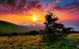 Lovely Hill Tree Orange Sunset wallpapers and stock photos