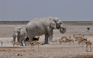 Elephants Gazelles wallpapers and stock photos