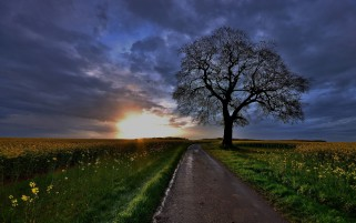 Fields Road Tree Deep Sky wallpapers and stock photos
