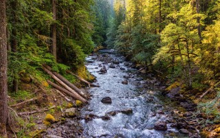 Wild River Through The Forest wallpapers and stock photos