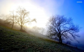 Misty Morning Hills Trees wallpapers and stock photos