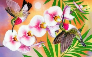 Hummingbirds & Orchids wallpapers and stock photos