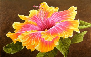 Beautiful Hibiscus Flower wallpapers and stock photos