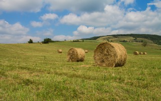 Green Hills Trees Hay Bales wallpapers and stock photos