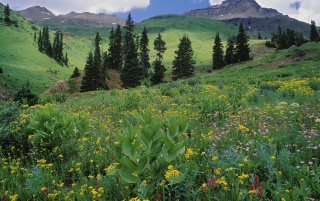 Alpine Meadow wallpapers and stock photos