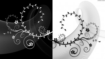 Black & White Stalk Abstract wallpapers and stock photos