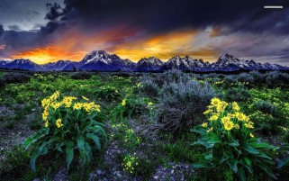 Random: Mountain Yellow Flowers Sunset