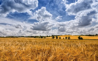 Previous: Golden Wheat Field Cloudy Sky