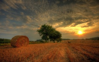 Random: Hay Bales Field Harvest Sunset